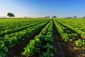 bio-based supply chains