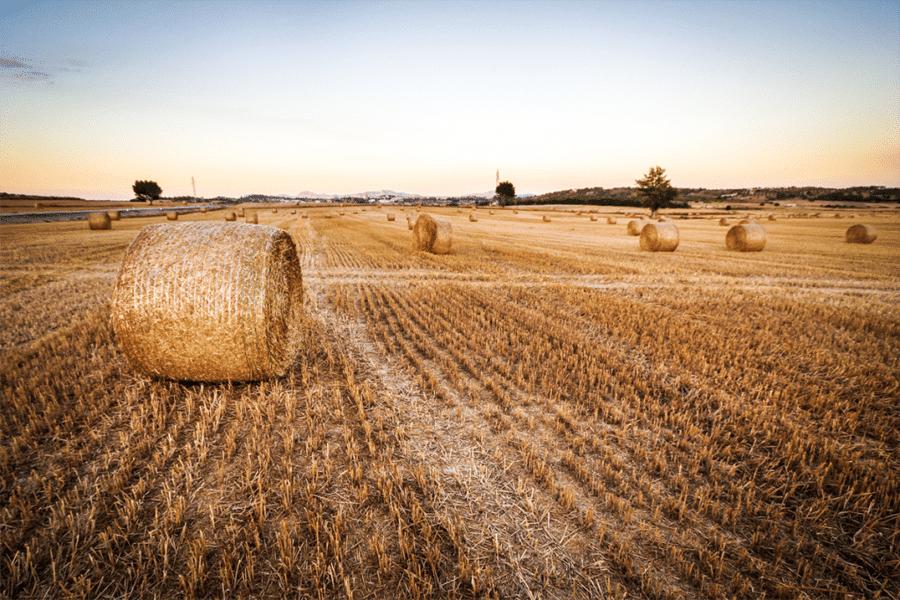 HEMP FARM BALE