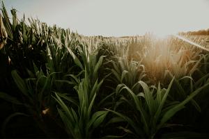 crop rotation industrial revolution